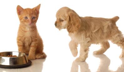 Porady dotyczące zwierząt